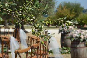 oliv trees wedding flowers country vineyard wedding venue