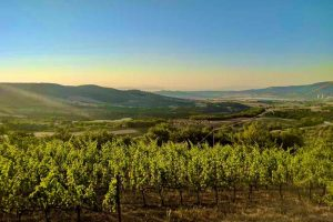 Vineyard weddings and luxury wine resorts in Abruzzo Marche, Umbria, Tuscany and Rome.