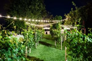 Mass overhead party lighting for exclusive and romantic vineyard weddings in Italy, in Abruzzo